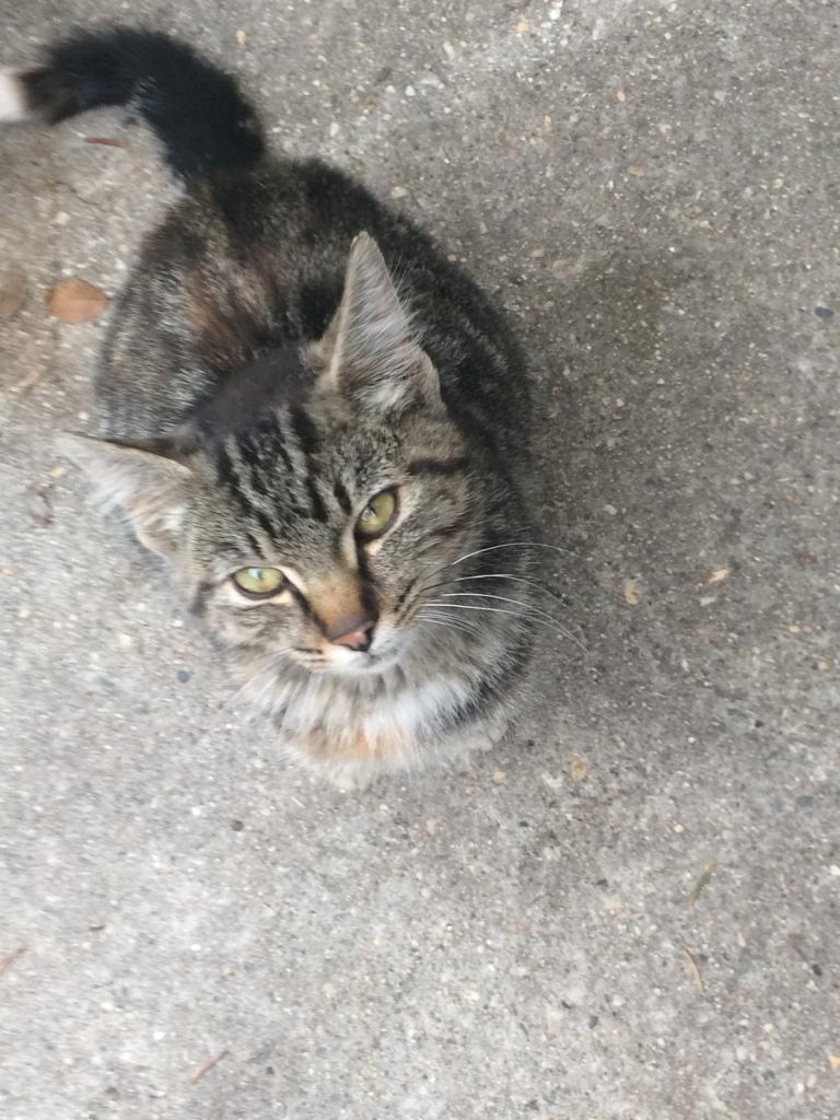 Stevie the Shop Cat - an adopt a pet love story