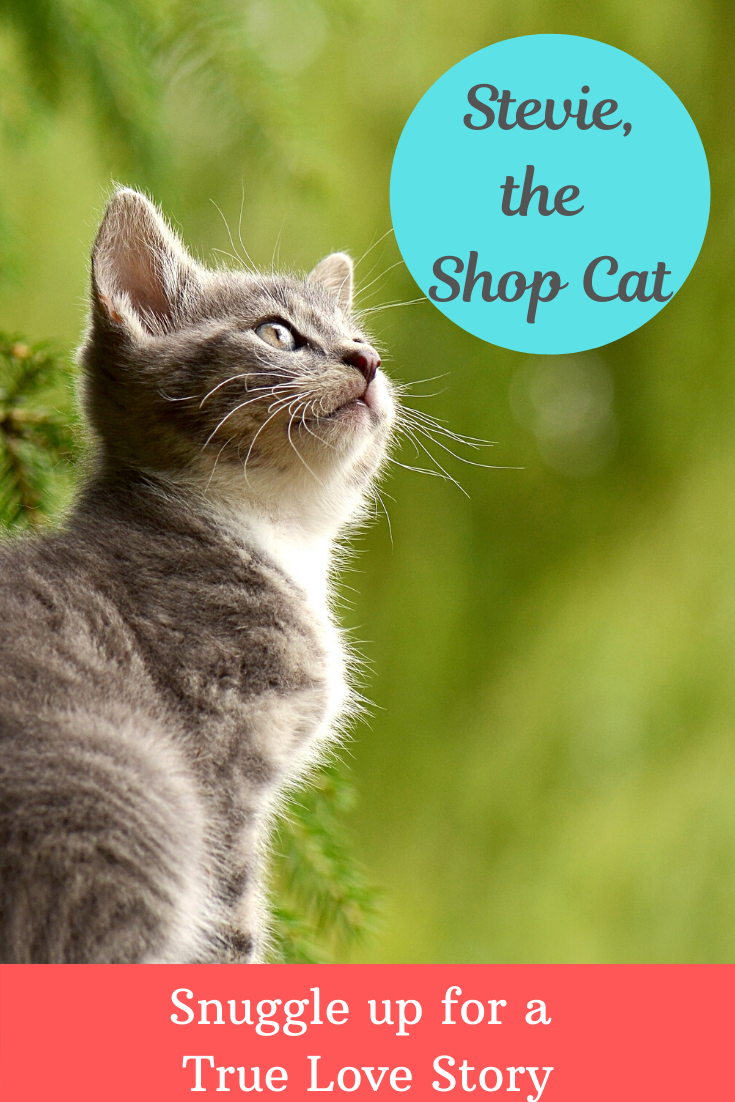 """I'm praying we get to keep Stevie..."" For a parent who dislikes animals, these are dangerous words to hear. Find out how our family came to love Stevie, the shop cat."